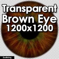 Biology 043 - Brown Eye