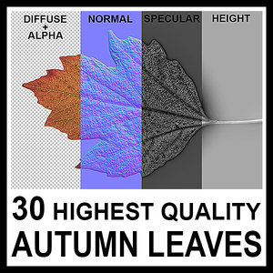 30 High Quality Autumn Leaves