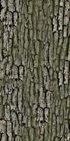 Tree_Baark_1