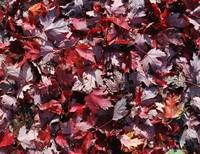 Leaf_Texture_0001