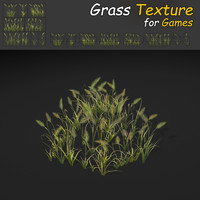Feather Reed Grass Texture