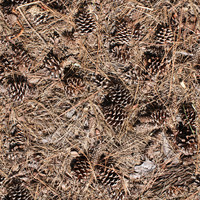 Pine Cone Ground Texture