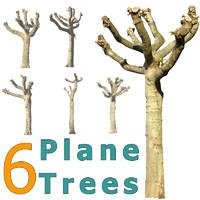 6 Cutout Plane Trees