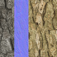 Tree Bark Tileable Texture 6