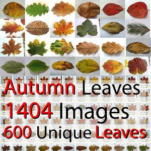 Autumn Fall Leaves HUGE collection Maple Oak Walnut Ivy Wine Needles