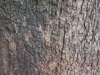 Free bark tree