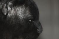 detail of tomcat head
