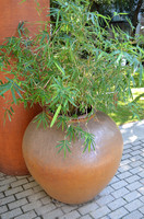 Potted Plant_2