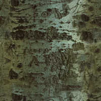Tree Trunk III