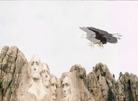 Animated GIF Of An Eagle