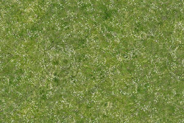 texture other grass field flowers
