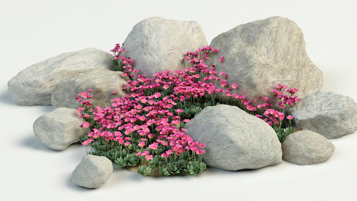3dsmax saxifrage flower garden
