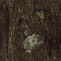Tree Trunk IV