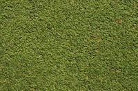 Grass_Texture_0006