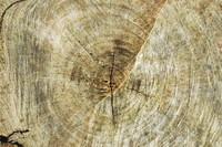 Circle_Texture_0001