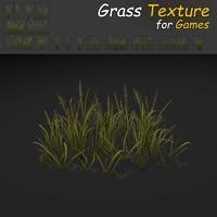 Cattail Grass Texture