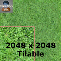 Texture Seamless 2048X2048 Aerial Forest Type A