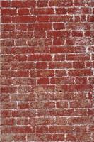 Brick Wall with lichen