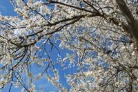 Spring_0002