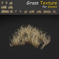 Dry Dense Grass Texture