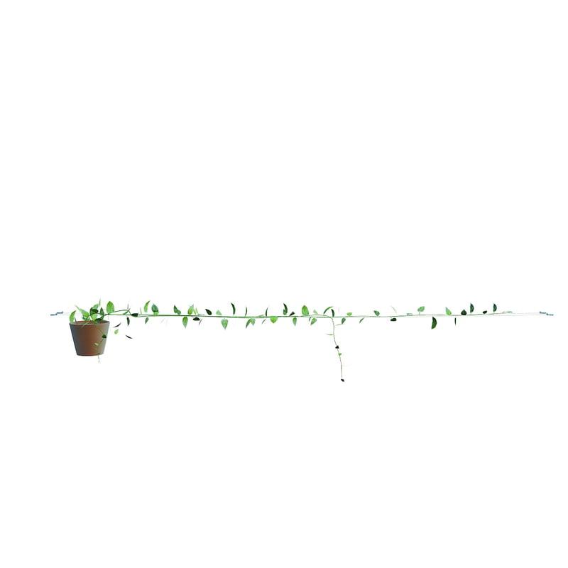scindapsus aureus 4 max