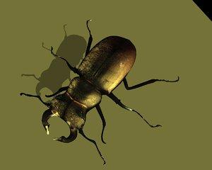 3d beetle