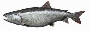 3d model lake trout