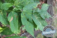 Plant Texture 06