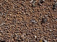 Indian tea texture map 08