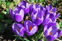 Spring_0003