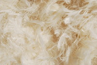 Feather_Texture_0001