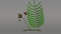 delonix flowering plants 3d obj
