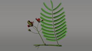 delonix flowering plants 3d obj