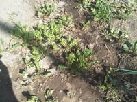Grass Soil