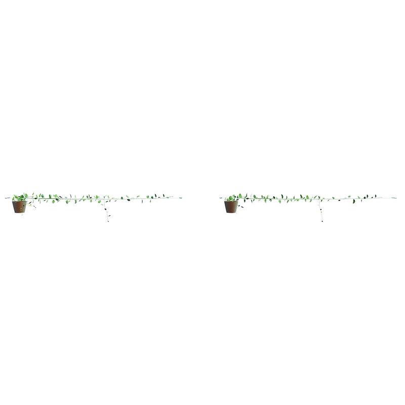 scindapsus aureus 4 3d fbx