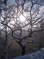 Tree sun and snow