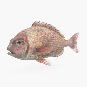 3d model bream fish