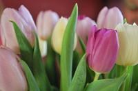 Spring_0004