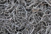 Spanish Moss_Texture_0001