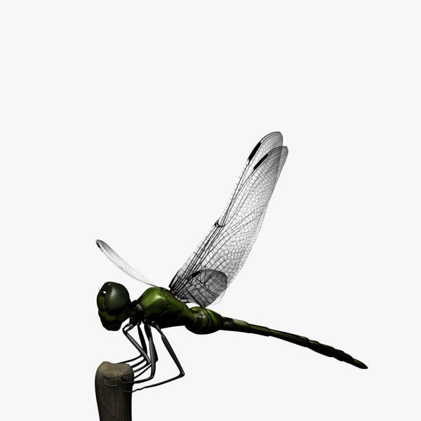 maya dragonfly animation