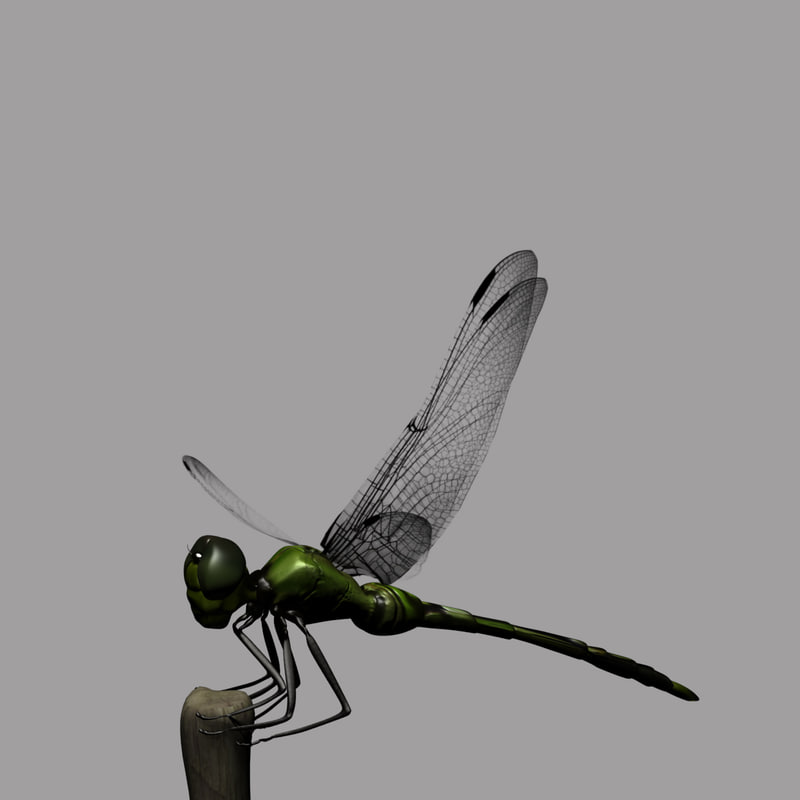 maya dragonfly animation