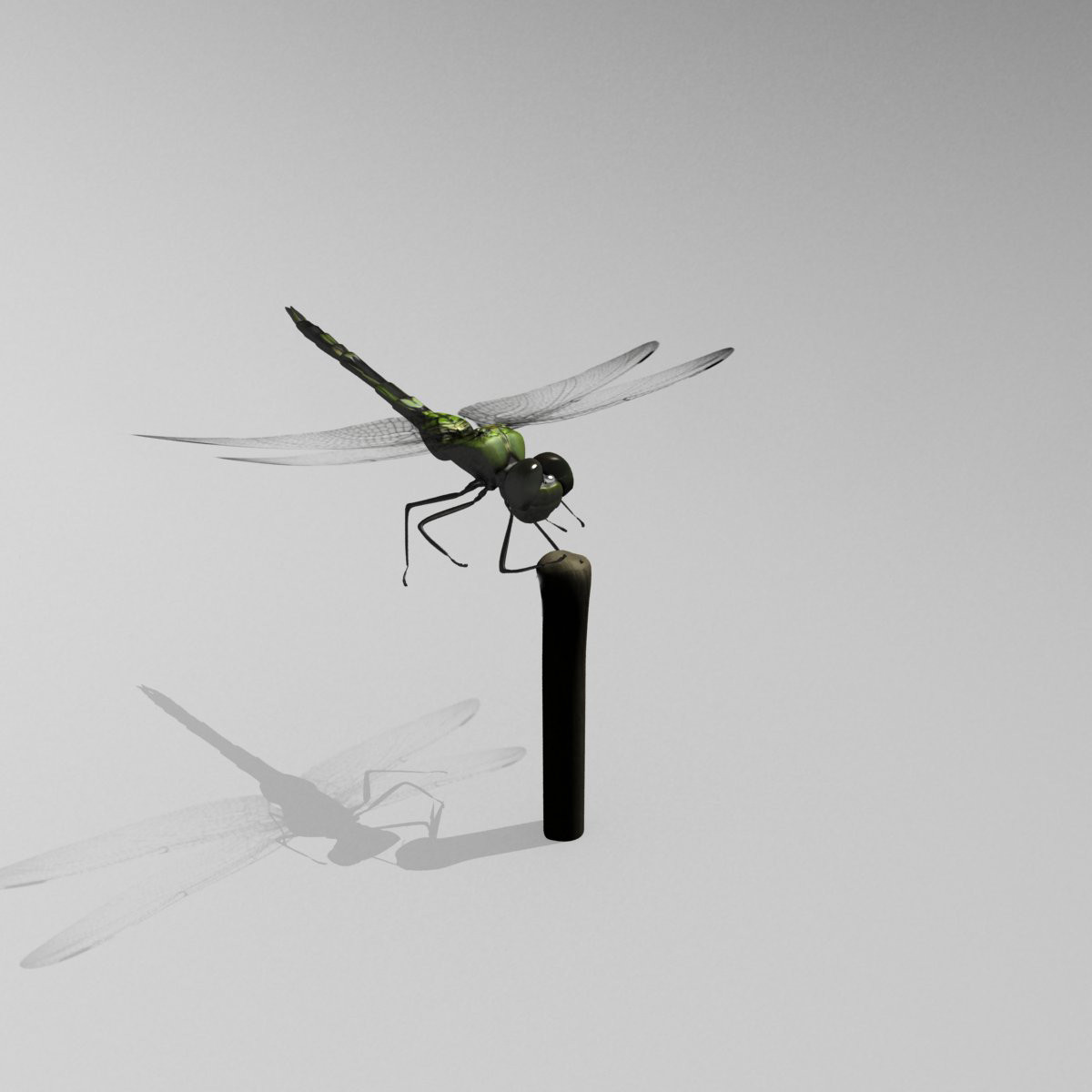 dragonfly animation