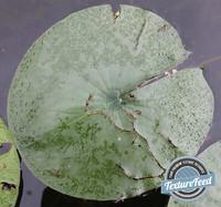 Plant Texture 03
