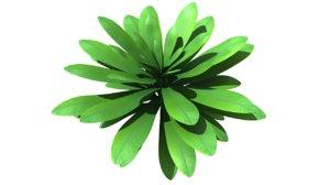 euphorbia flowering plants 3d obj