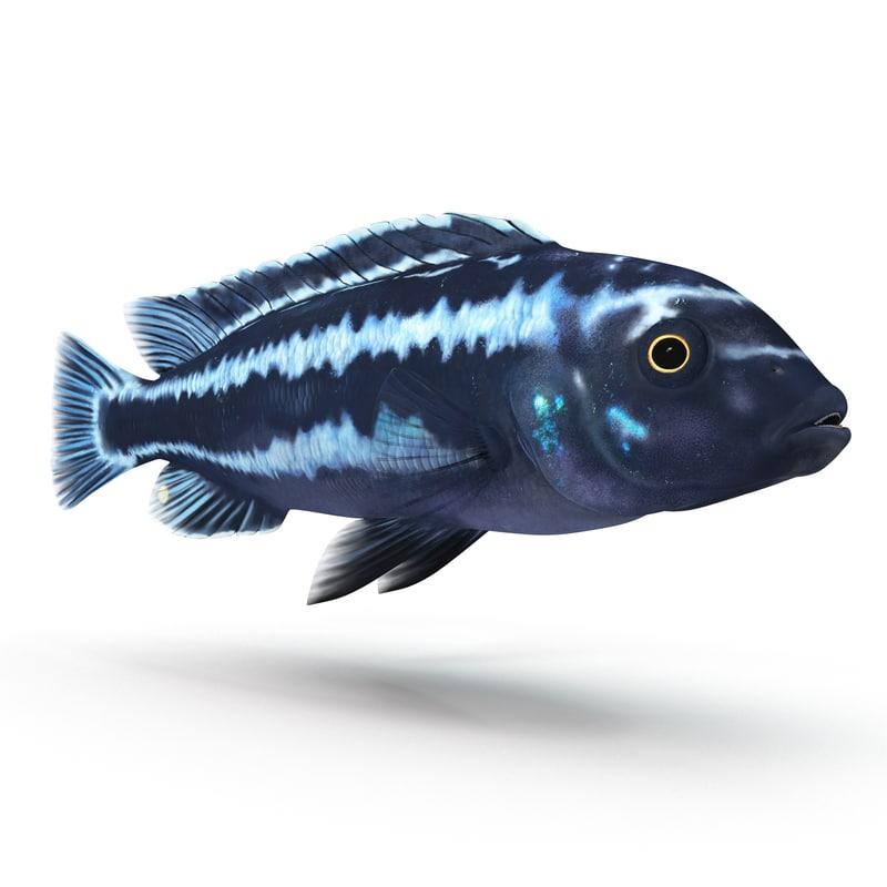 tropical fish cichlid 3d 3ds