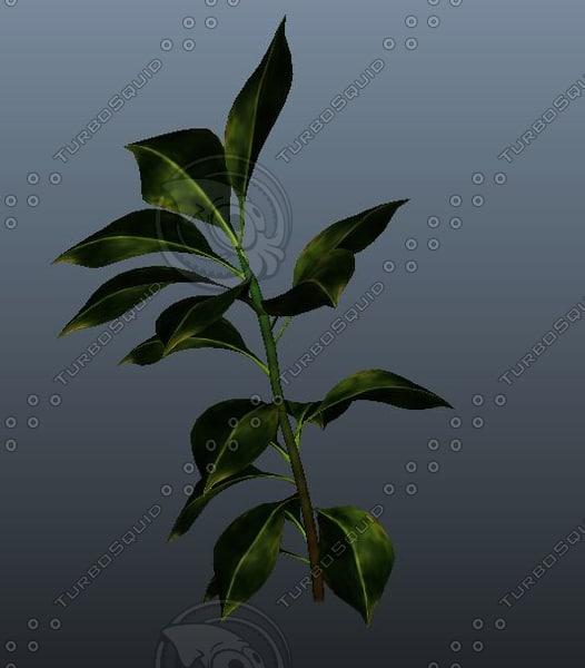 realistic rubber plant 3d ma