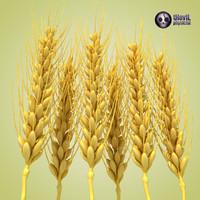 wheat 3d c4d