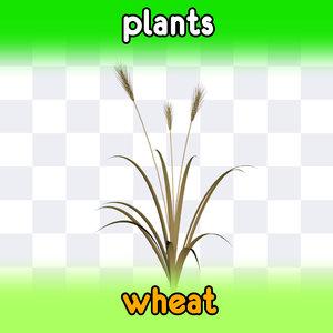 3d wheat