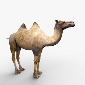 3d max camel