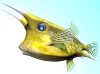 3d model of longhorn cowfish fishes
